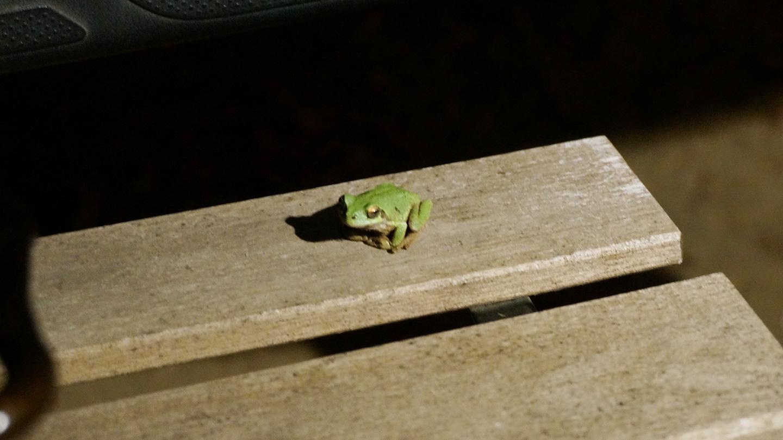 オートキャンプフルーツ村のカエル